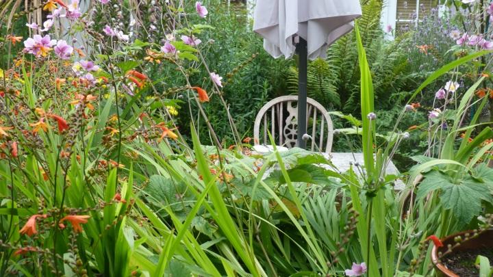 the garden at Worth Matravers tea room